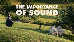 The Importance of Sound